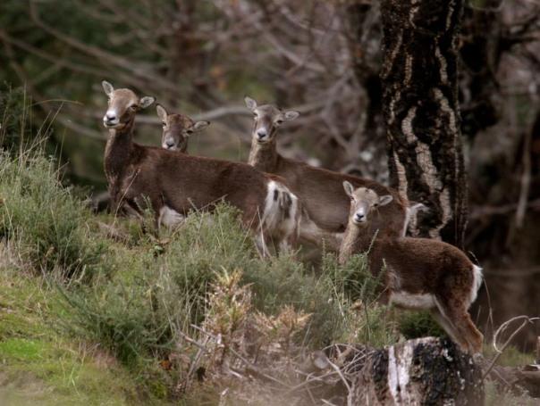 parque cinegético de la Sierra de Ojen.paraje. medio ambiente. entorno natural malaga. Ciervos